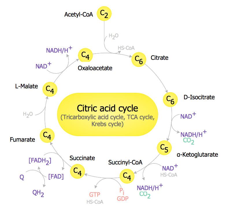 Biology solution – TCA Cycle