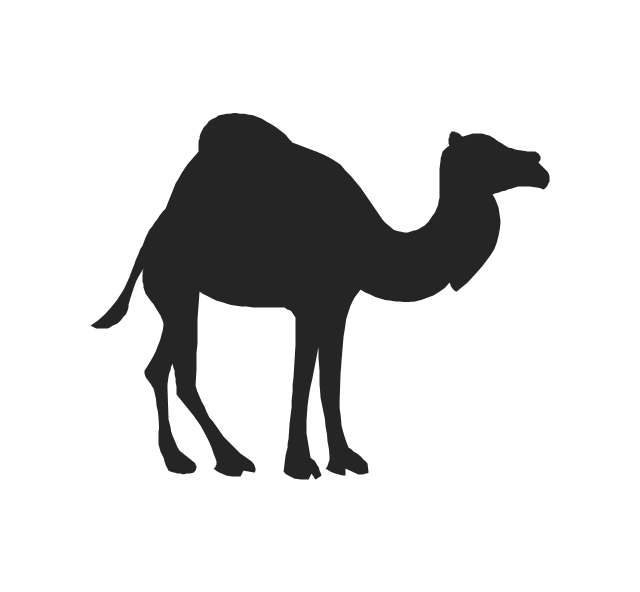 Camel, camel,