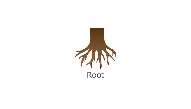 , root