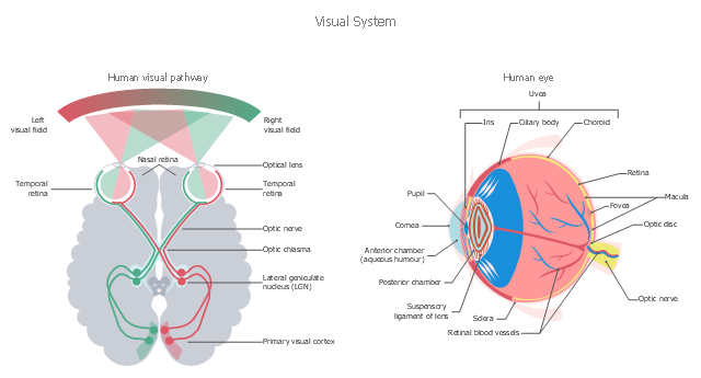 Healthcare illustration, eye, block diagrams,