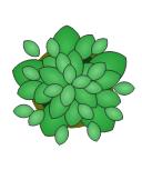 Large Plant, plant, potted plant,