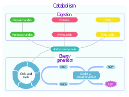 Catabolic pathways, proteins, polysaccharides, oxidative phosphorylation, nicotinamide adenine dinucleotide, NADH, nicotinamide adenine dinucleotide, NAD, monosaccharides, fatty acids, fats, energy generation, digestion, citric acid cycle, tricarboxylic acid cycle, TCA cycle, Krebs cycle, amino acids, adenosine triphosphate, ATP, adenosine diphosphate, ADP, acetyl coenzyme A,