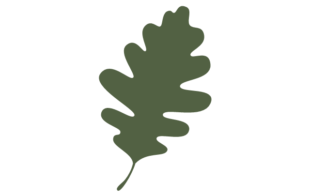 Tree leaf - oak, oak tree leaf,