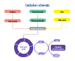 how to avoid catabolic state