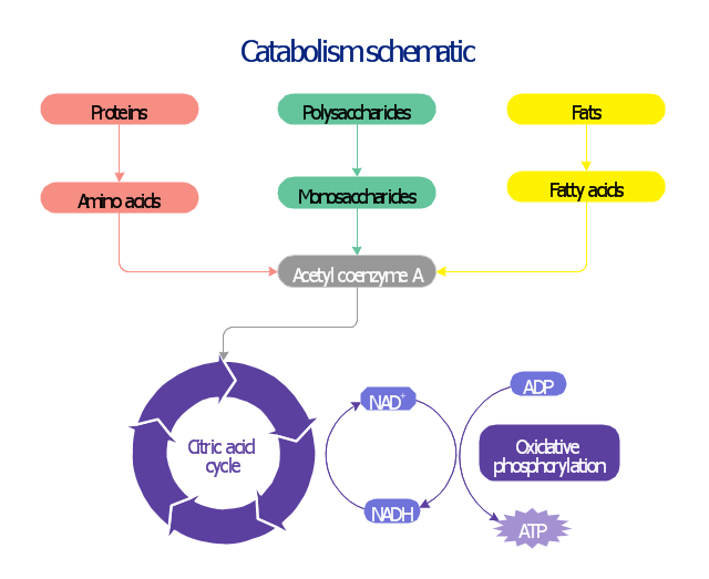 Catabolic pathway map, proteins, polysaccharides, oxidative phosphorylation, nicotinamide adenine dinucleotide, NADH, nicotinamide adenine dinucleotide, NAD, monosaccharides, fatty acids, fats, citric acid cycle, tricarboxylic acid cycle, TCA cycle, Krebs cycle, amino acids, adenosine triphosphate, ATP, adenosine diphosphate, ADP, acetyl coenzyme A,